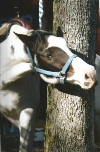horse0089