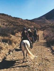 horse0131