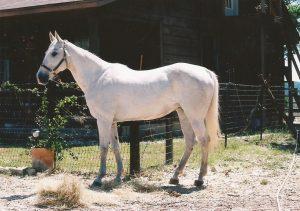 horse0154