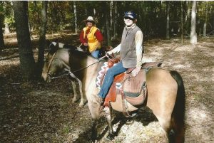 horse0185